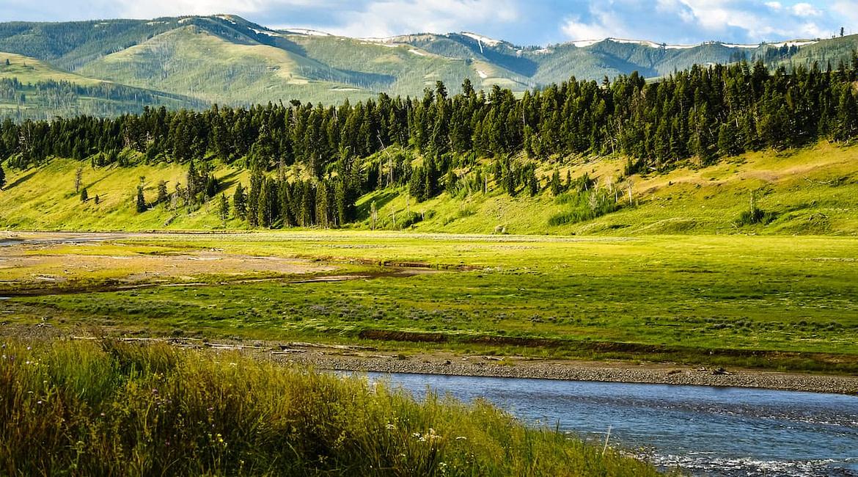 Vadles a Lamar Valley-ben, a Yellowstone Nemzeti Park északi részén