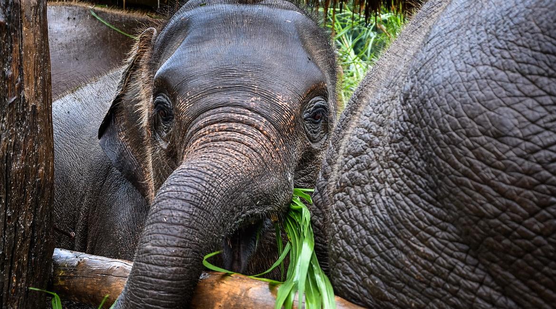 Látogatás az elefántoknál Észak Thaiföld dzsungelében