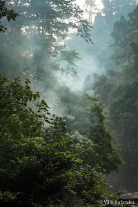 Szumátra, orangutan, dzsungel, Indonézia