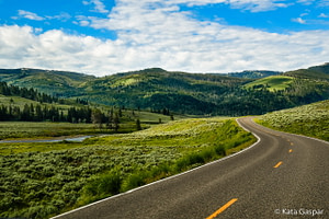 USA, Vadnyugat, Yellowstone, Lamar Valley, bölények