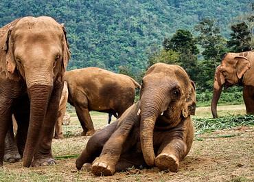 Kalandok az elefánt-konyhában