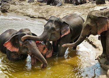 Mekong Elephant Park, Laosz – az elefánt Paradicsom