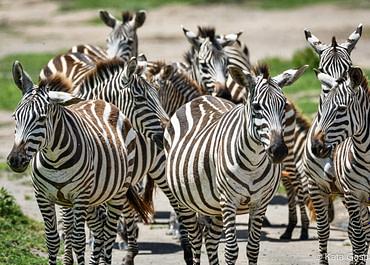Tanzániai kalandok: kiscsoportos utazás egy nem hétköznapi időszakban