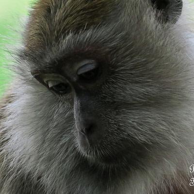 Kuala Lumpur – madarak, majmok, virágok & szitakötők - Tüske Ágnes írása