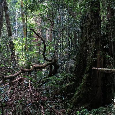 Egyre mélyebben a szumátrai dzsungelben - Tüske Ágnes írása