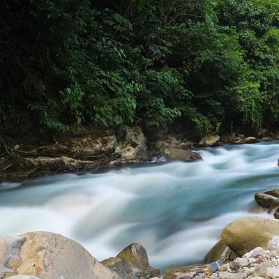 Egy újabb nap a szumátrai dzsungelben - Tüske Ágnes írása