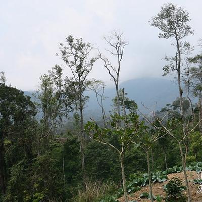 Úton a szumátrai vulkánok felé - Tüske Ágnes írása