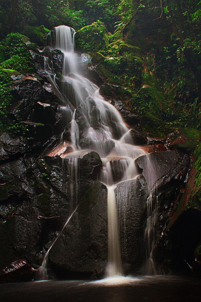 Szumátra, dzsungel, Indonézia