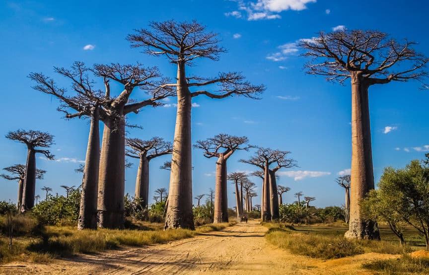 Madagaszkar